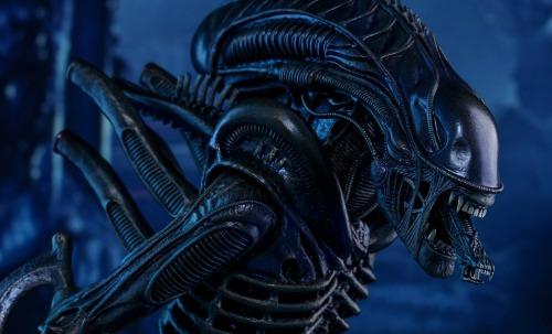 aliens-alien-warrior-sixth-scale-hot-toys-feature-902693.jpg
