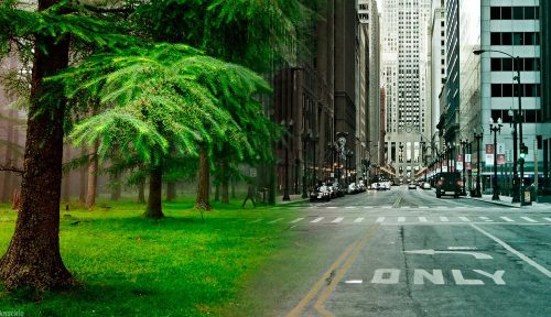 nature_vs_city_by_admiralknuckle-d8o40on-1000x576.jpg